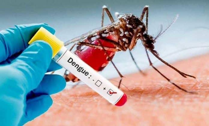 Южная Азия переживает вспышку лихорадки Денге на фоне пандемии коронавируса