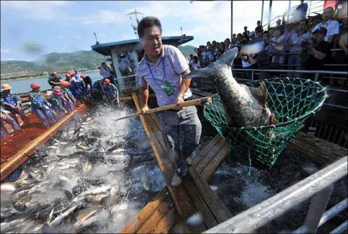 Запрет на рыбалку в крупнейшей реке Китая.