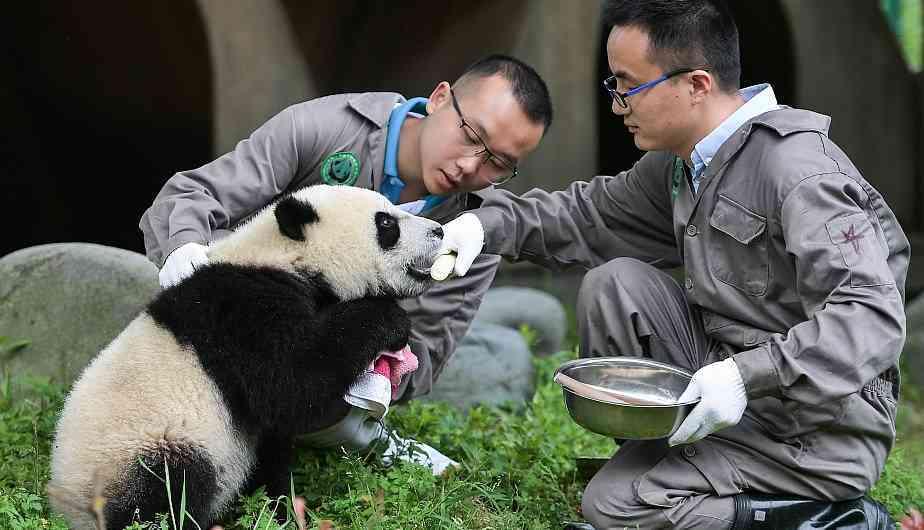 Заповедник панд в Сычуани