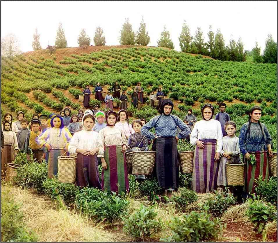 Китайская история Грузинского чая